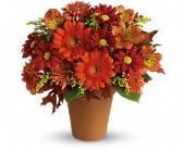 Naples Florists Wedding Flowers Funeral Flowers