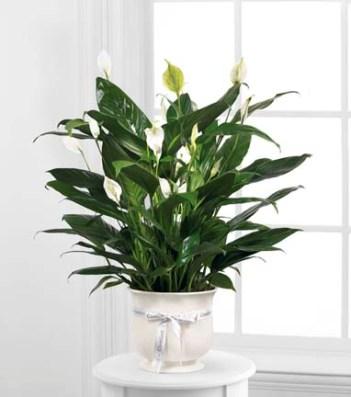 Comfort Planter in Fond Du Lac WI - Haentze Floral Co