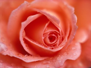 Flower Delivery New Mexico Hand Designed And Delivered Flowers Source ·  ABOUT US. ABOUT US. About Garden Mart Inc Carlsbad ...