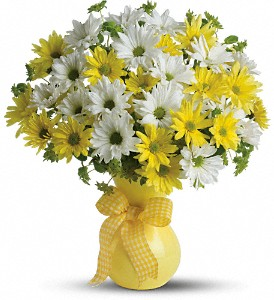 Teleflora's Upsy Daisy in Oklahoma City OK, Capitol Hill Florist and Gifts