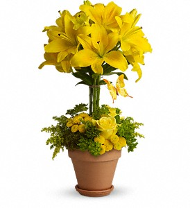 Yellow Fellow in Metairie LA, Villere's Florist