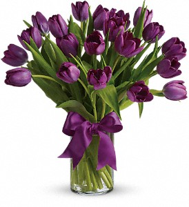 Passionate Purple Tulips in Milwaukee WI, Flowers by Jan