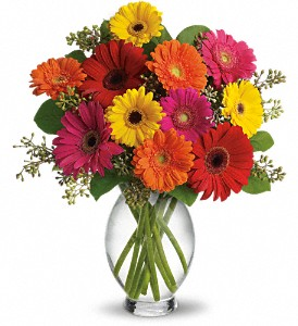 Teleflora's Gerbera Brights in Manassas VA, Flower Gallery Of Virginia