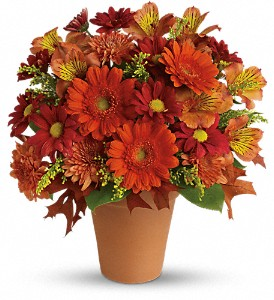 Golden Glow in St. Petersburg FL, Hamiltons Florist