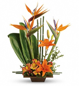 Teleflora's Exotic Grace in Reno NV, Bumblebee Blooms Flower Boutique