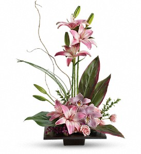 Imagination Blooms with Cymbidium Orchids in Newport VT, Spates The Florist & Garden Center