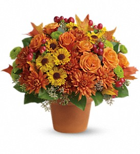 Sugar Maples in Fredonia NY, Fresh & Fancy Flowers & Gifts