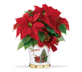Teleflora's Wysocki Poinsettia Bouquet in Oklahoma City OK, Array of Flowers & Gifts