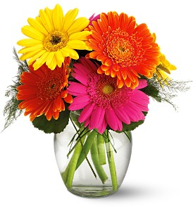 Teleflora's Fiesta Gerbera Vase in Northfield MN, Forget-Me-Not Florist