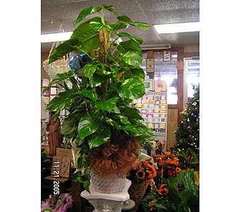 Plants in Hempstead TX, Diiorio All Occasion Flowers