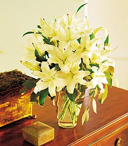 Perfect White Lilies in Norristown PA, Plaza Flowers