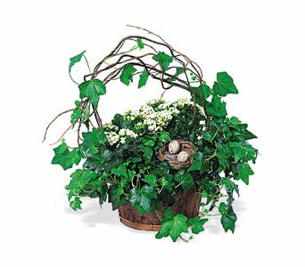 Kalanchoe and Ivy Basket in Norristown PA, Plaza Flowers