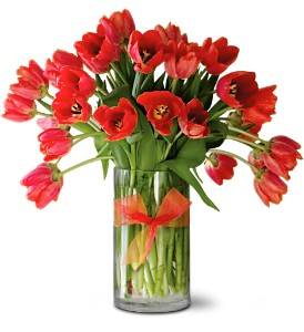 Teleflora's Radiantly Red Tulips Premium in Bloomington IL, Beck's Family Florist