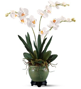 Orchids Forever by Teleflora in KANSAS CITY MO, Toblers Flowers