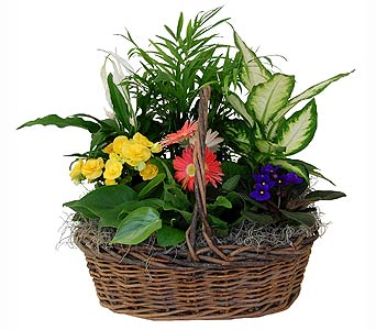 Country Basket - Green and Blooming in Towson MD, Radebaugh Florist and Greenhouses