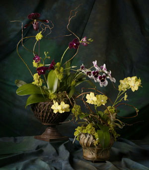 Extravagant Orchids in Kentfield CA, Paradise Flowers
