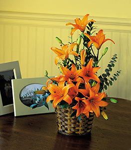 Asiatic Lilies in Norristown PA, Plaza Flowers