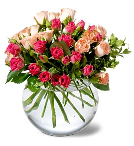 Teleflora's Crimson & Coral Roses in Mooresville NC, All Occasions Florist & Boutique<br>704.799.0474