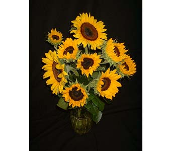 Sunflower Field in Dallas TX, Z's Florist