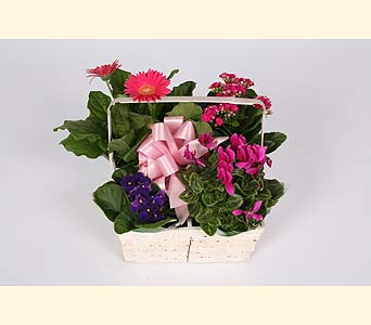 European Blooming Plant Basket in Southampton PA, Domenic Graziano Flowers