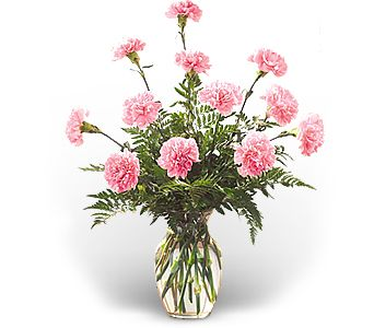 Dozen Pink Carnations in Largo FL, Rose Garden Flowers & Gifts, Inc