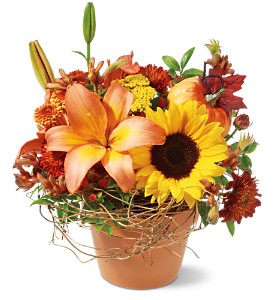 Pumpkin Patch in Tyler TX, Country Florist & Gifts
