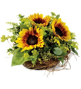 Nesting Sunflowers in Crown Point IN, Debbie's Designs