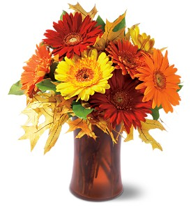Autumn Gerberas in Broomall PA, Leary's Florist