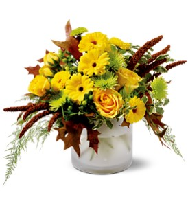 Harvest Sun in Oakville ON, Oakville Florist Shop