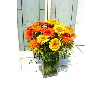 Happy Gerbera in Lake Forest CA, Cheers Floral Creations