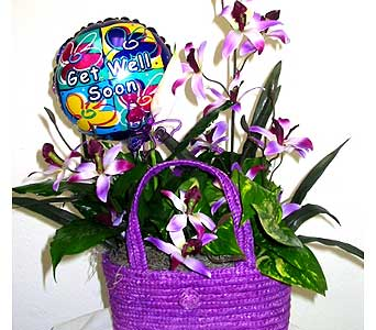 GP29A ''Field of Orchids'' Get Well Ivy Planter in Oklahoma City OK, Array of Flowers & Gifts