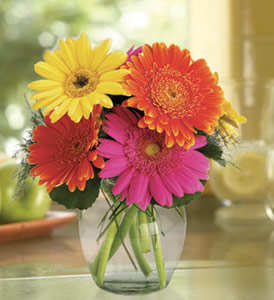 Fiesta Gerbera Vase in Norristown PA, Plaza Flowers