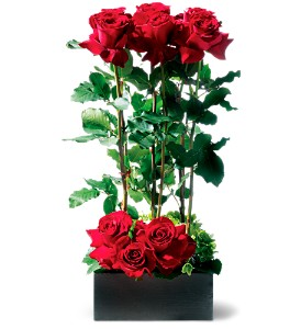 Scarlet Splendor Roses in Gautier MS, Flower Patch Florist & Gifts