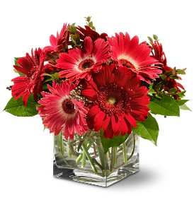 Teleflora's Gorgeous Gerberas in Richland MI, Bloomers