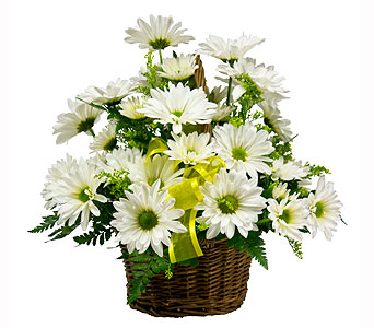 Daisy Basket in Towson MD, Radebaugh Florist and Greenhouses