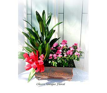 Planted Garden Series# 86 in Lake Forest CA, Cheers Floral Creations