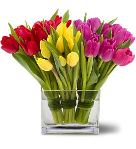 Teleflora's Tulips Together in Bellevue WA, DeLaurenti Florist