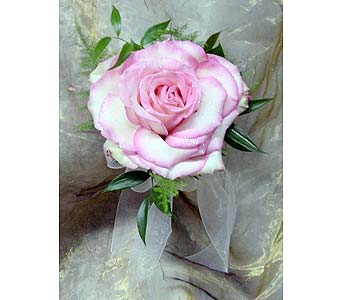 Single Signature Rose in Massapequa Park NY, Bayview Florist & Montage  1-800-800-7304