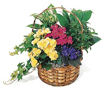 European Garden Basket in Big Rapids, Cadillac, Reed City and Canadian Lakes MI, Patterson's Flowers, Inc.