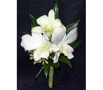 Orchid in Massapequa Park NY, Bayview Florist & Montage  1-800-800-7304
