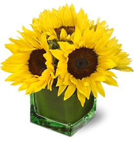 Teleflora's Modern Sunshine in Longview TX, The Flower Peddler, Inc.
