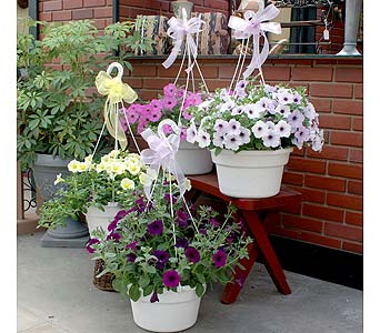 Petunia Hanging Basket in Schenectady NY, Felthousen's Florist & Greenhouse