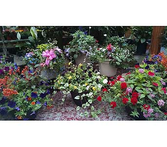 Large Patio Pots in Schenectady NY, Felthousen's Florist & Greenhouse