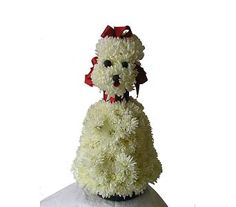 French Poodle in Wantagh NY, Numa's Florist