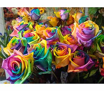 Rainbow Roses in Wantagh NY, Numa's Florist