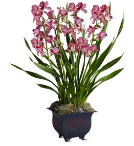 Simply Cymbidium in Los Angeles CA, Dave's Flowers