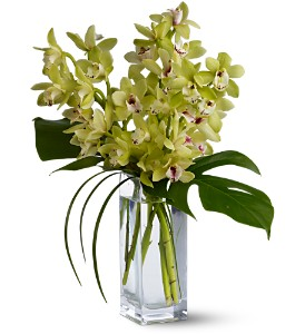 Teleflora's Orchid Elegance in Largo FL, Rose Garden Flowers & Gifts, Inc