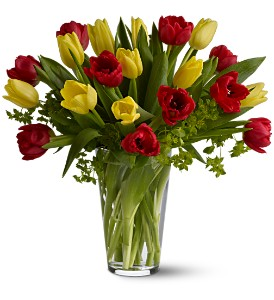 Dutch Delight in Dallas TX, All Occasions Florist