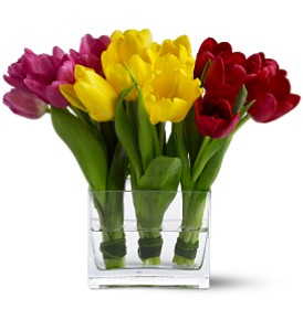 Teleflora's Tulip Trio in New York NY, CitiFloral Inc.