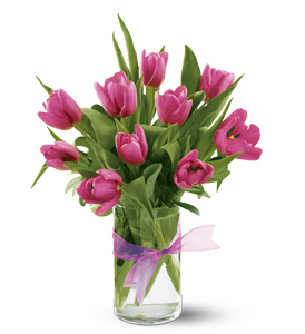 Spring Tulip Pick up Special in Columbus OH, OSUFLOWERS .COM